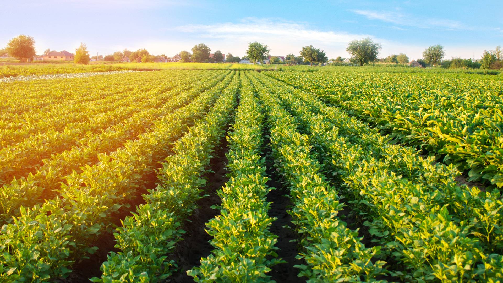 biostimulant agriculture solutions