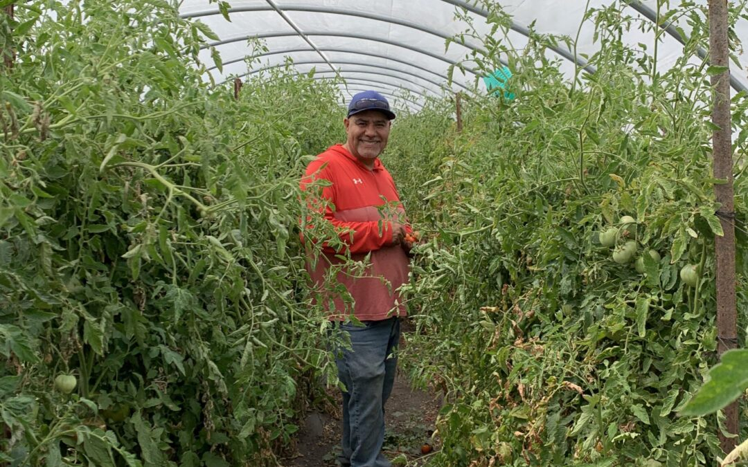 """The Patch Farm in Sonoma Says """"Unleash Root Inoculant is the Best Investment"""" for Organic Farming Practices"""